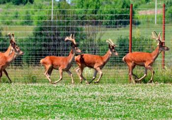 Разведение охотничьих животных